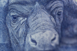 A closeup of a rand note.